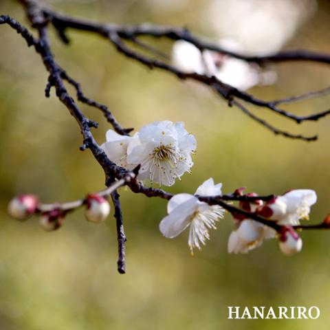 20100204 p1 成田山!其の参
