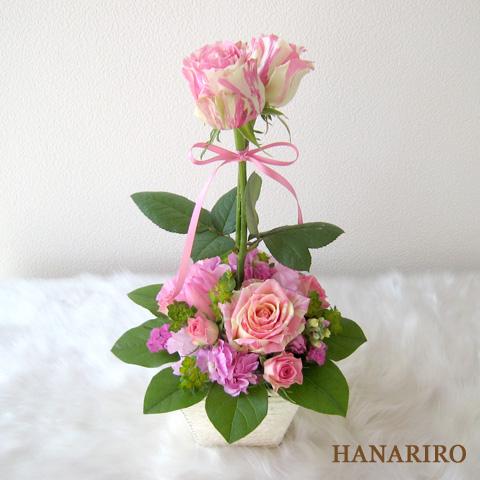 20120215 f3 花RiRoフラワーギフトコレクション。  20120215 3
